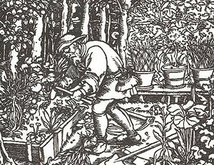 Raised Bed Garden Woodcut