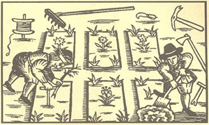 Kitchen Garden Woodcut